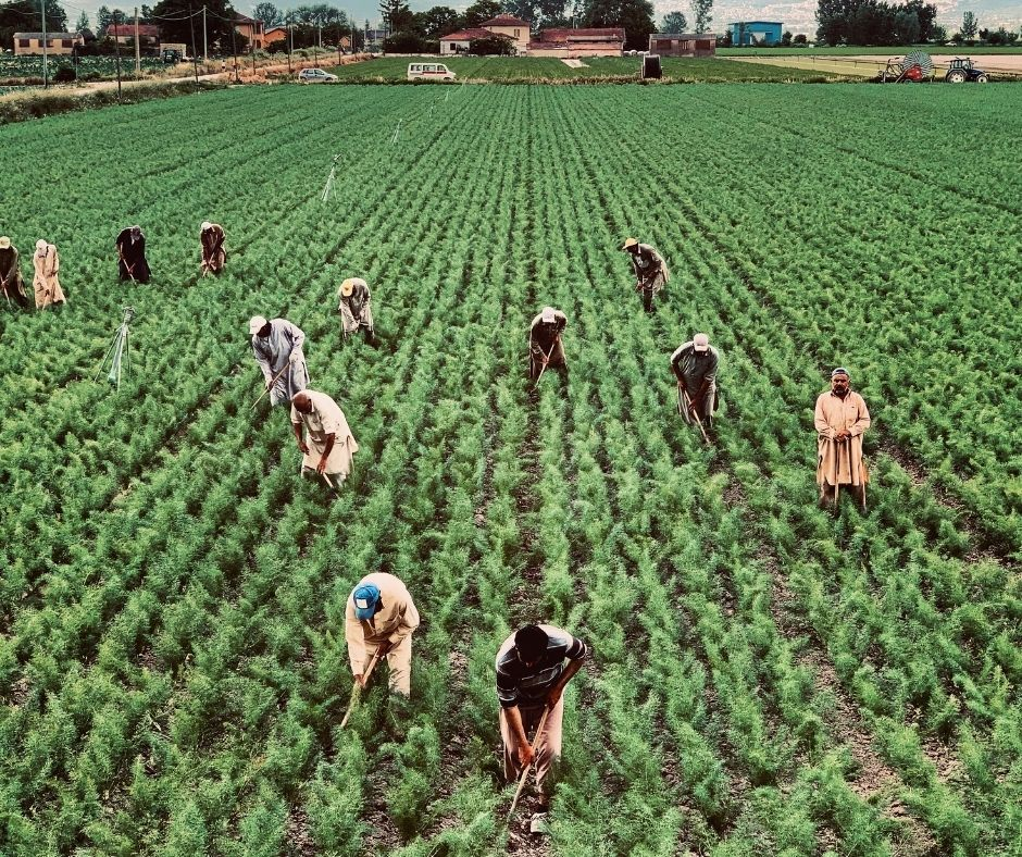 Call for Concept Notes for Promoting Research & Development into Agricultural Innovations and Modern Technologies in Nigeria